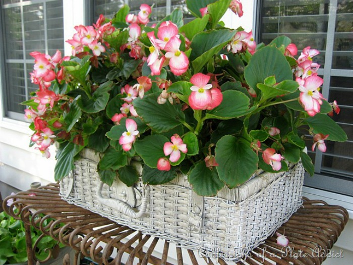 planter ideas using a picnic basket via confessions of a plate addict / grillo designs