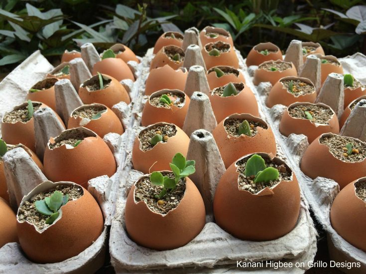 planter ideas egg shells