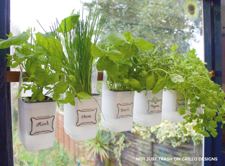 hanging milk jugs used as a bottle herb garden/ grillo designs / www.grillo-designs.com