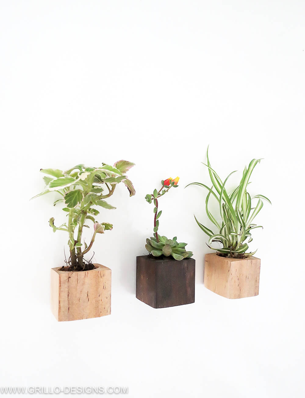Tutorial on how to make diy magnet planters / grillo designs