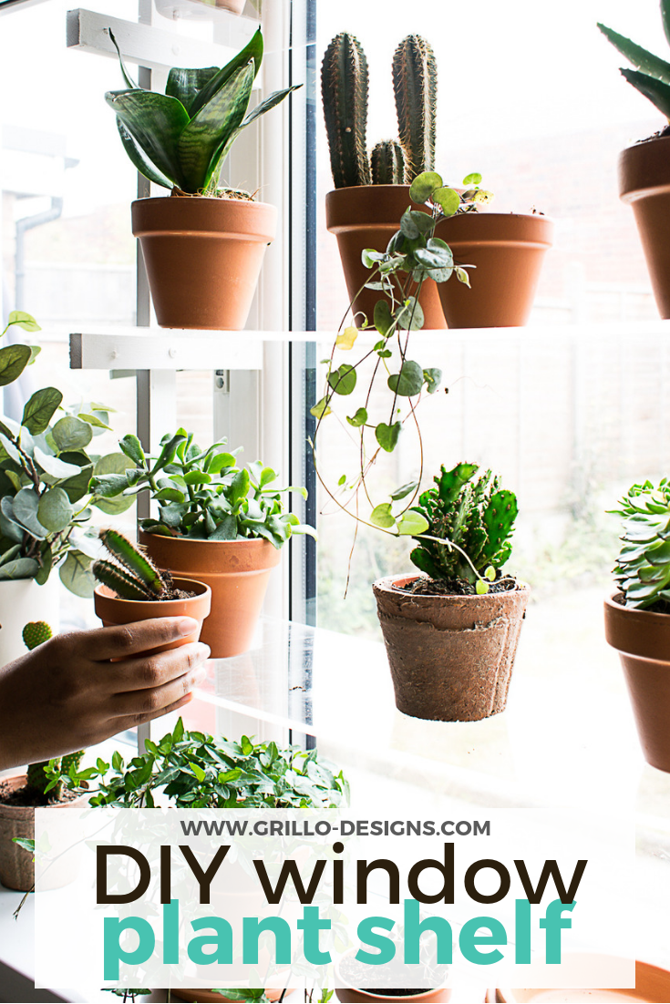 A variety of plants in terracota pots on the clear window shelves