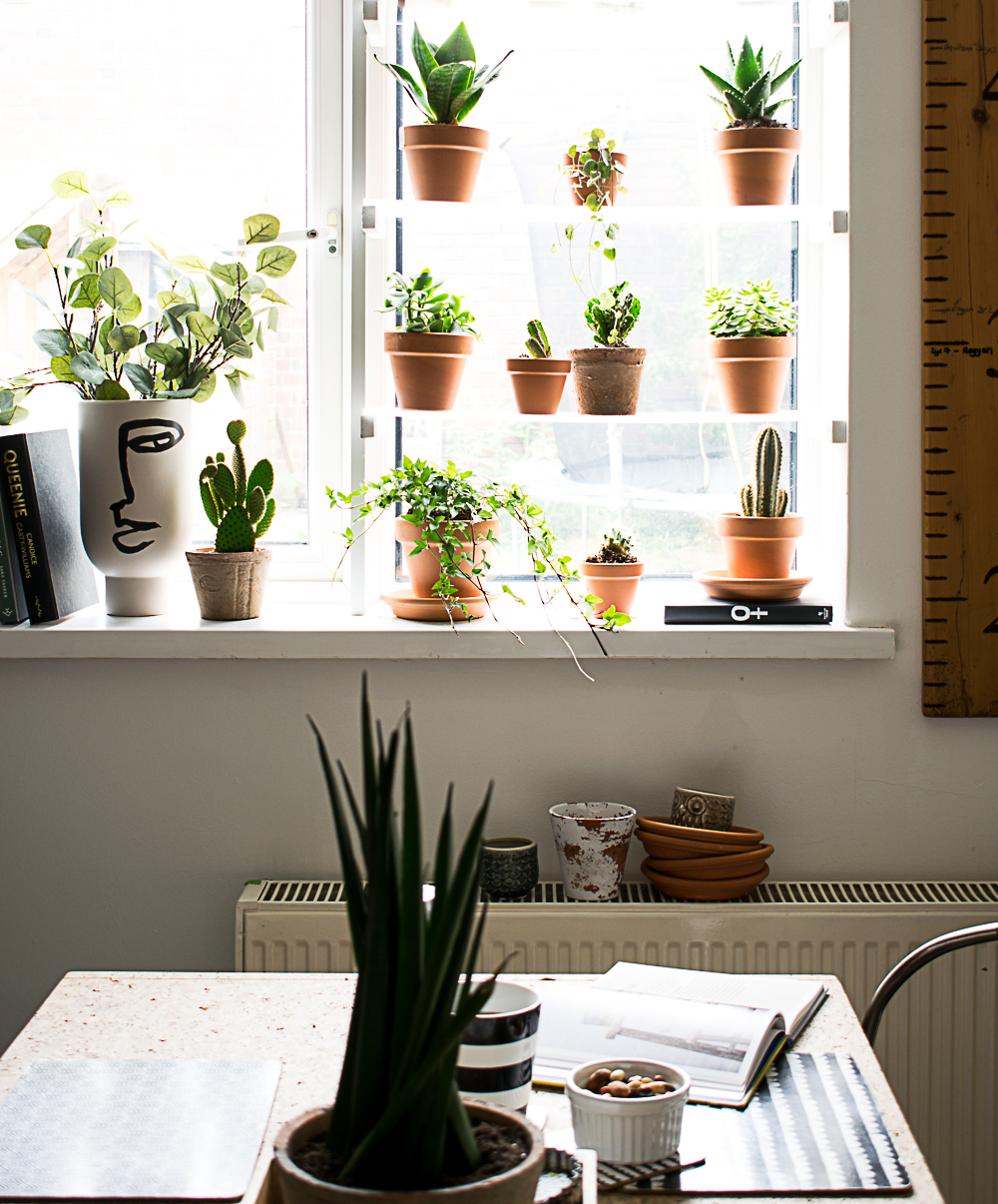 Vertical view of the plant shelves in the window. Cork board table seen