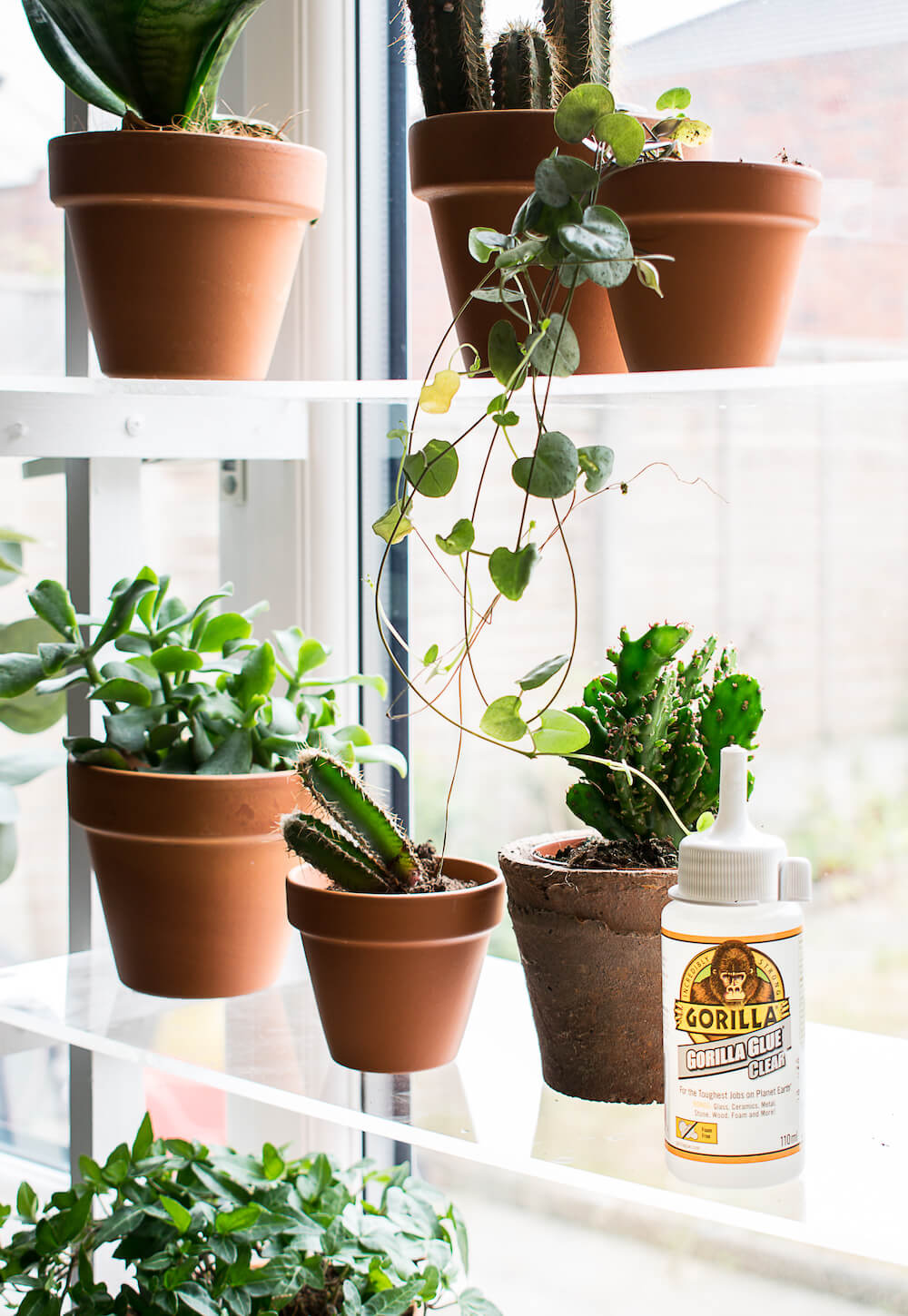 Image of gorilla clear glue on the third shelf next to a cactus plant
