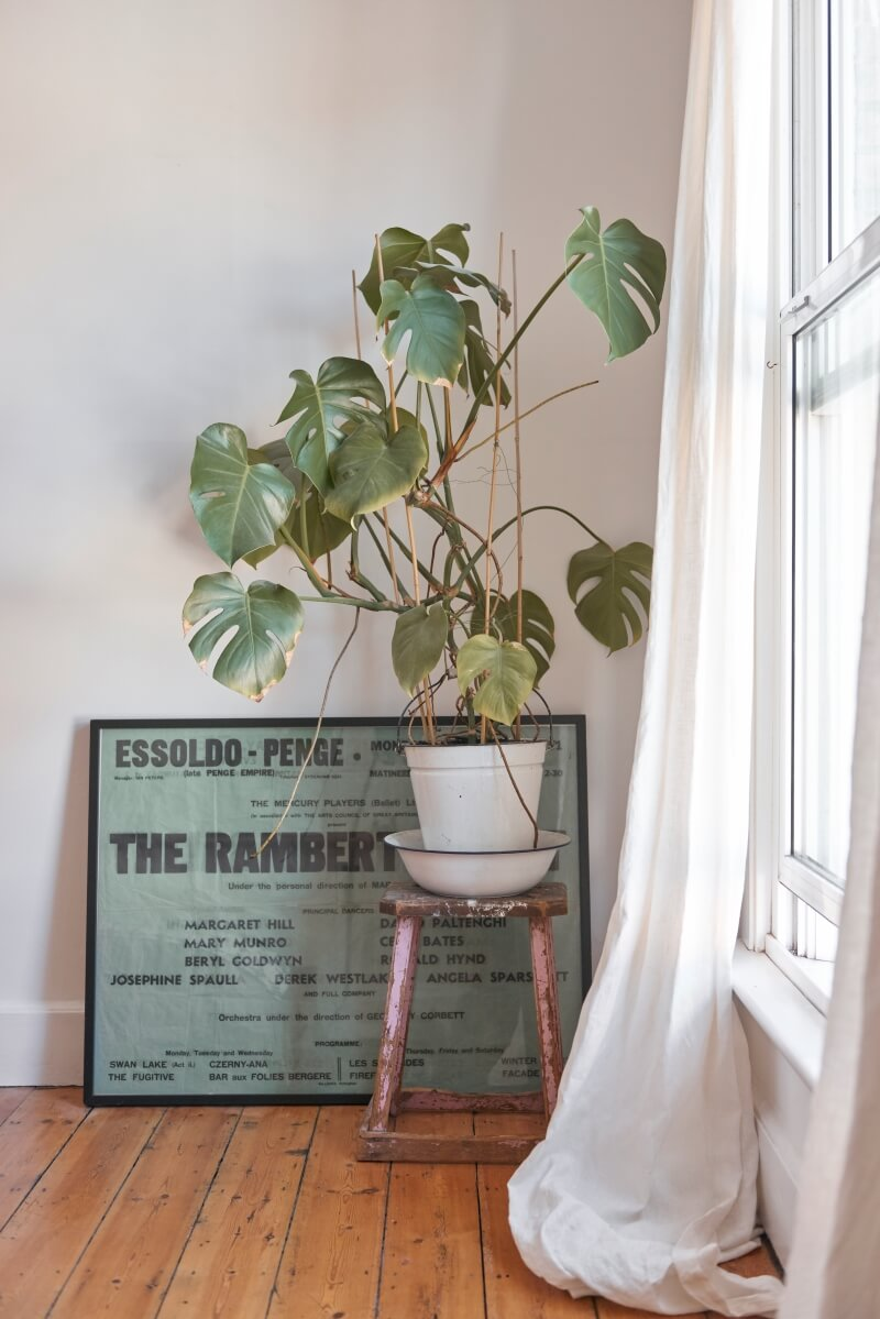 Plant on wooden stand next to framed art on the floor