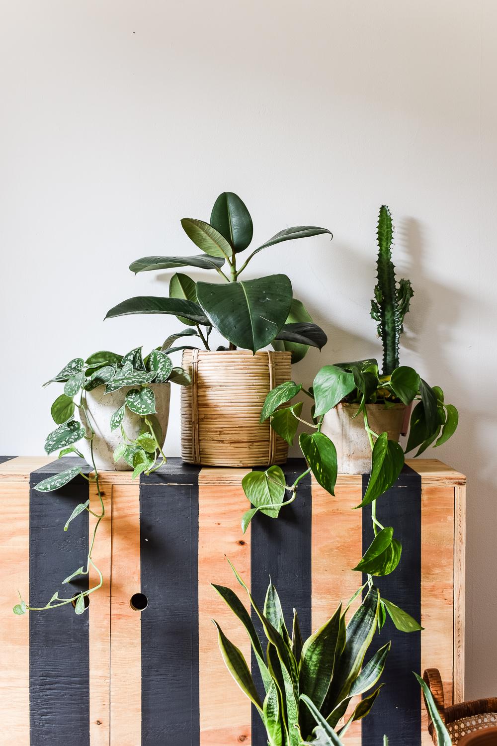 Plants sitting on a side cabinet painted with black striped