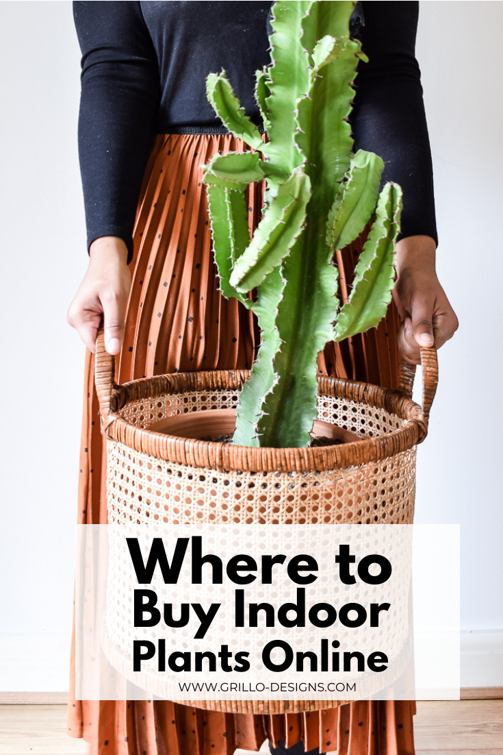 Where to buy indoor plants online pinterest graphic